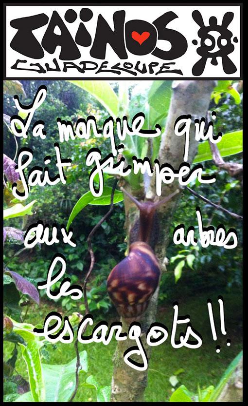 tainos guadeloupe pub escargots akatine
