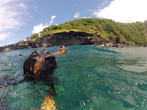 CANAL DES SAINTES TAINOS GUADELOUPE CHIEN