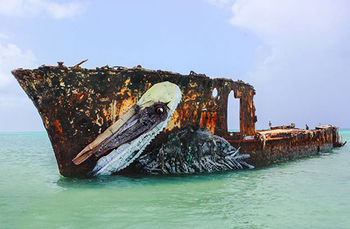 aruba pelican tainos guadeloupe street art