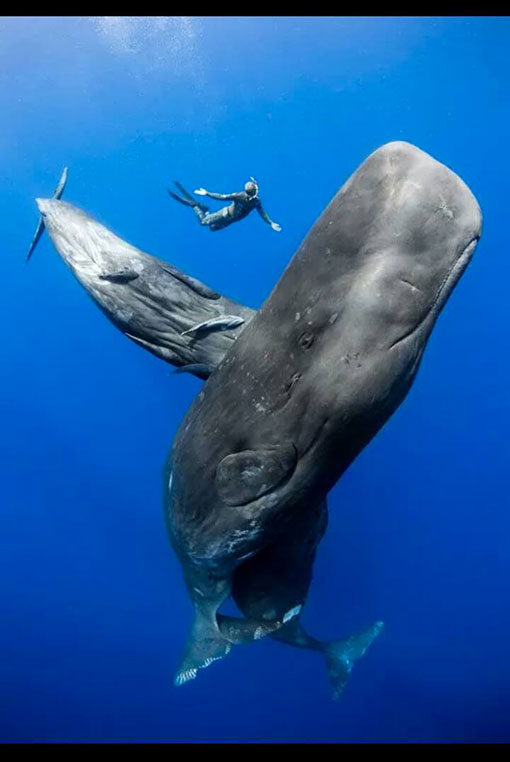 BALEINE RESPECT MOTHER OCEAN TAINOS GUADELOUPE